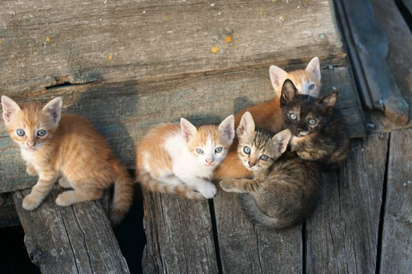 Litter of kittens in abandoned barn