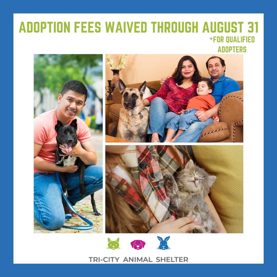 Adoption fees waived through August 31