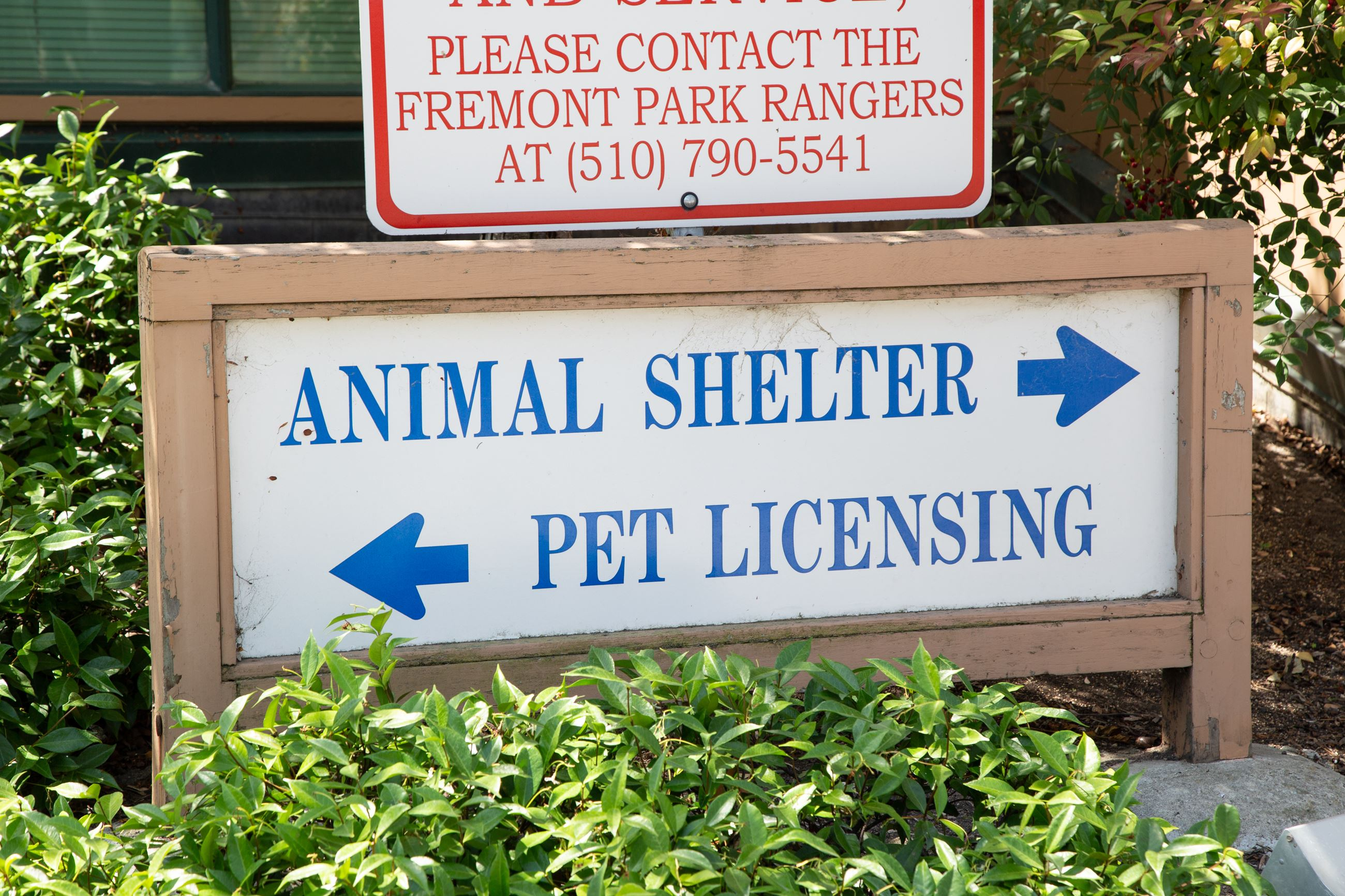 Animal Shelter Pet Licensing